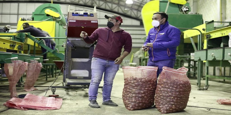 Gobernación de Cundinamarca comprará 1.200 toneladas de papa para apoyar a campesinos